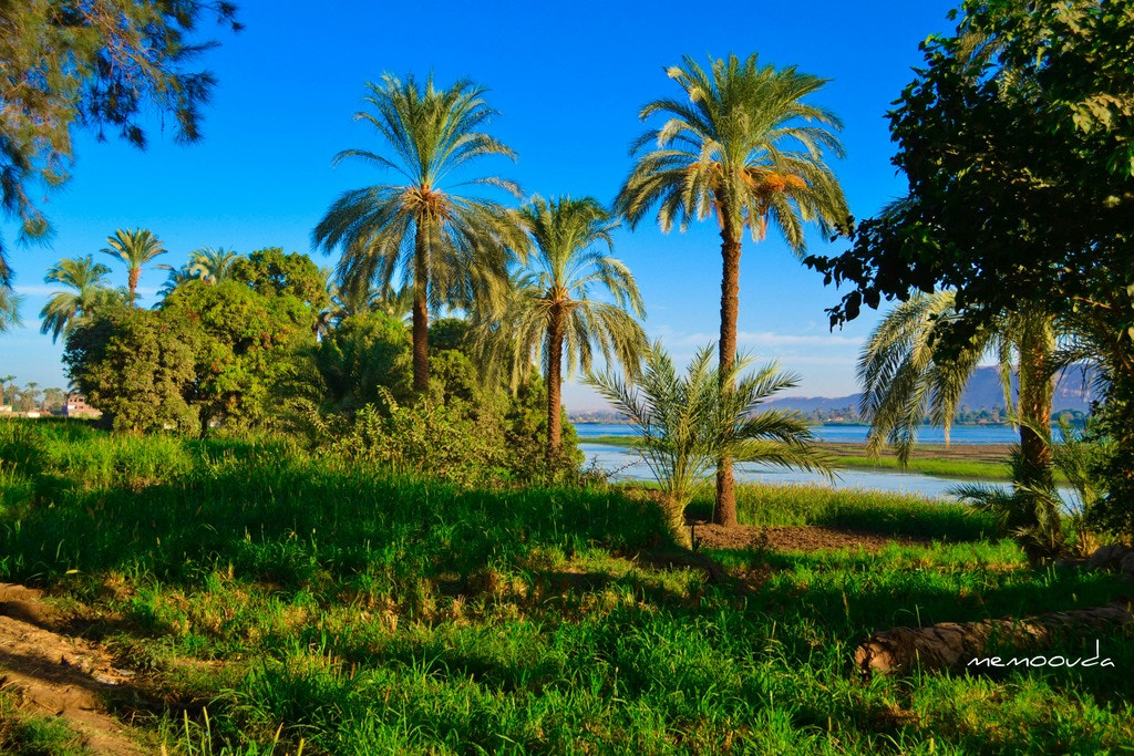 Photograph EGYPT THE GREEN LAND  by  memo ouda on 500px
