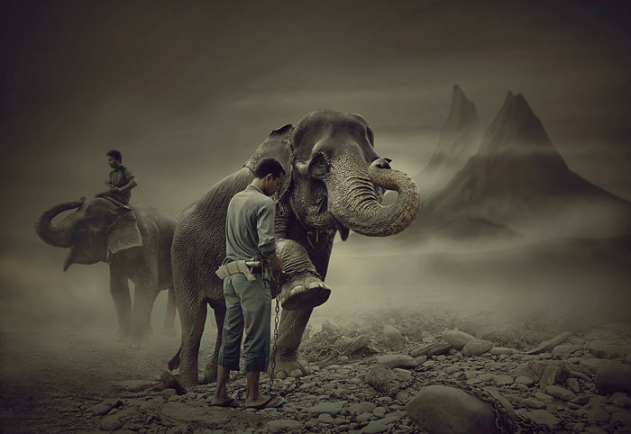 Photograph the mahout of the dreamland by Teuku Jody  Zulkarnaen on 500px