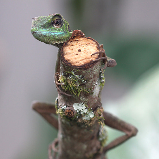 Photograph chameleon by Vittorio D'Apice on 500px