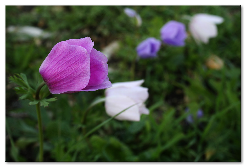 Photograph First pink by Zadok Shmuel on 500px