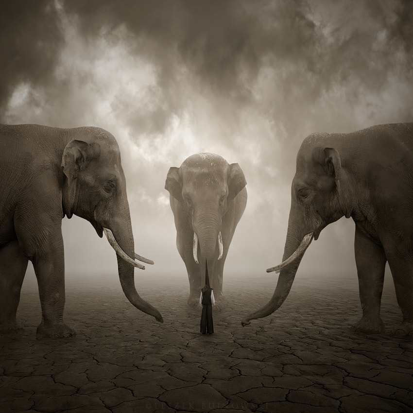 Photograph Elephant whisperer by Leszek Bujnowski on 500px