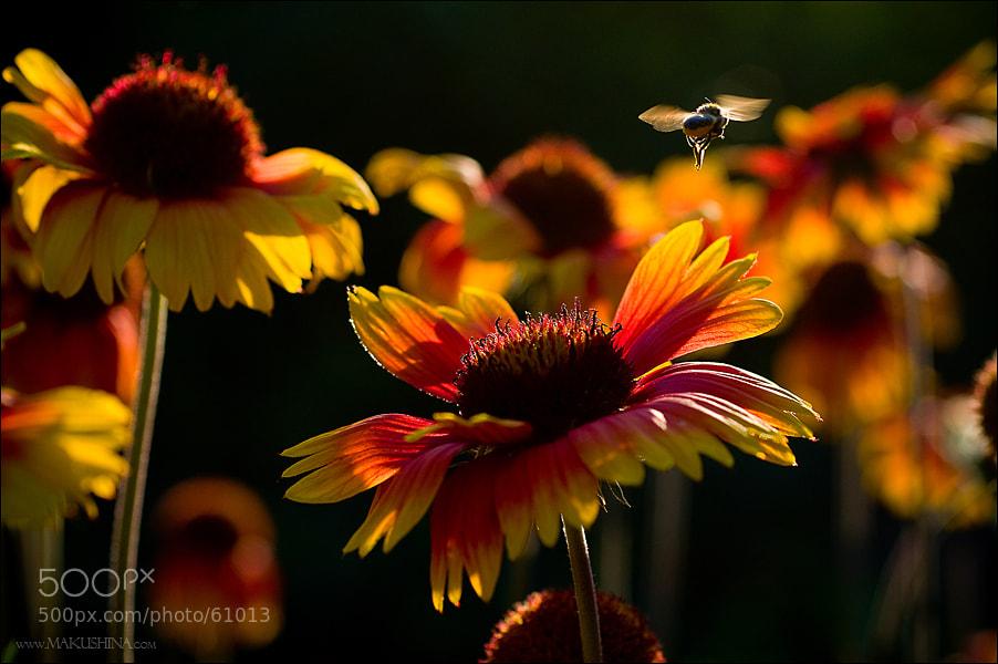 Photograph Домой by Irina Makushina on 500px