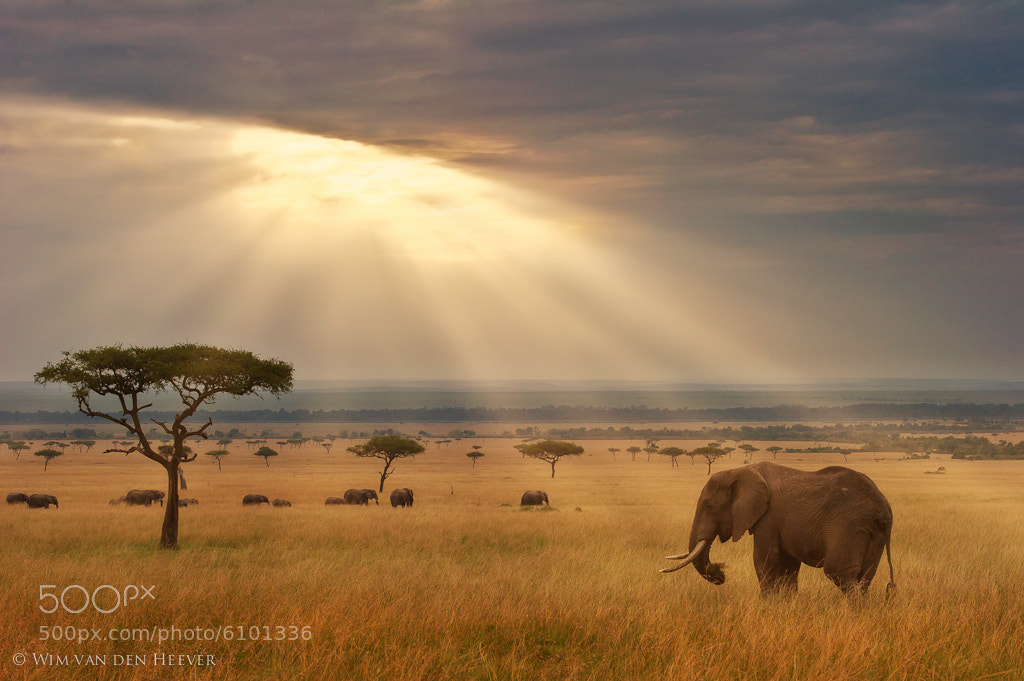 Photograph The Beauty of Africa by Wim van den Heever on 500px