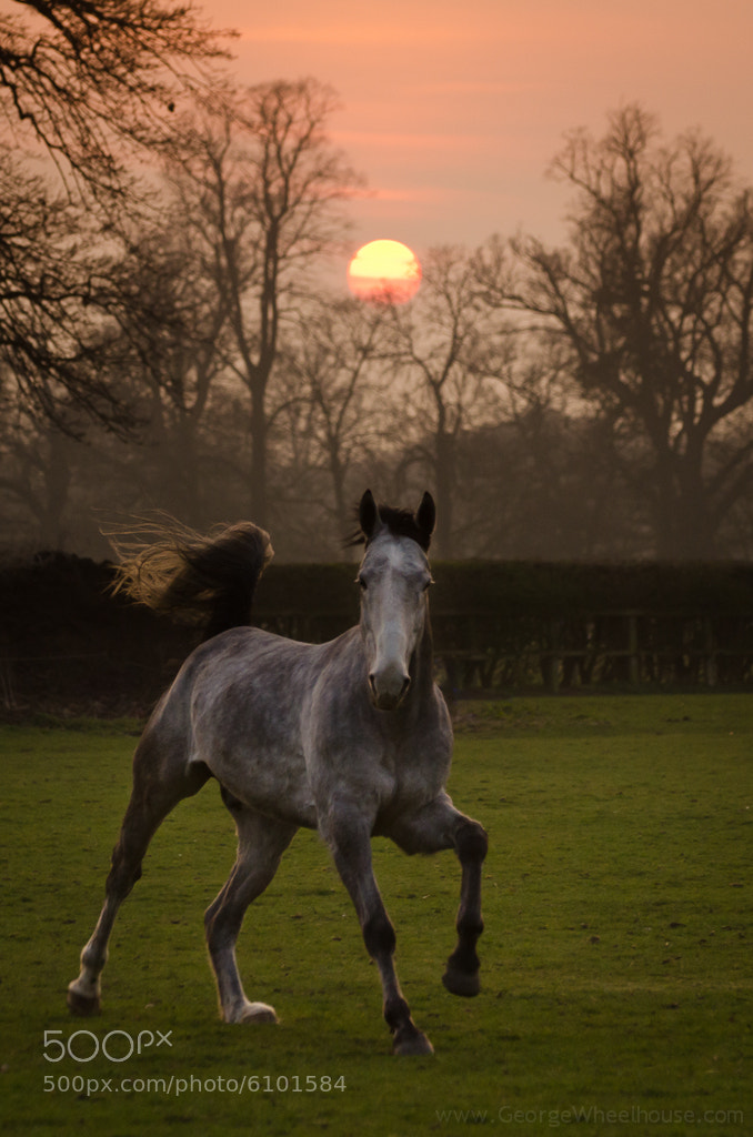 Photograph Jack - Sunset Portrait by George Wheelhouse on 500px