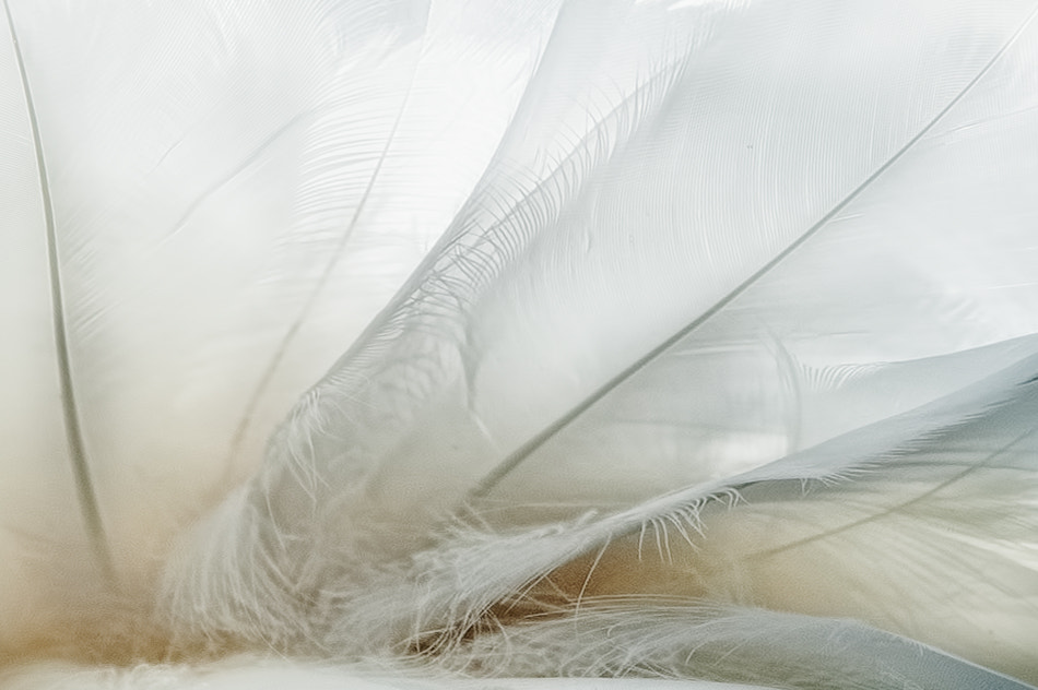 Photograph swan serenade by piet flour on 500px