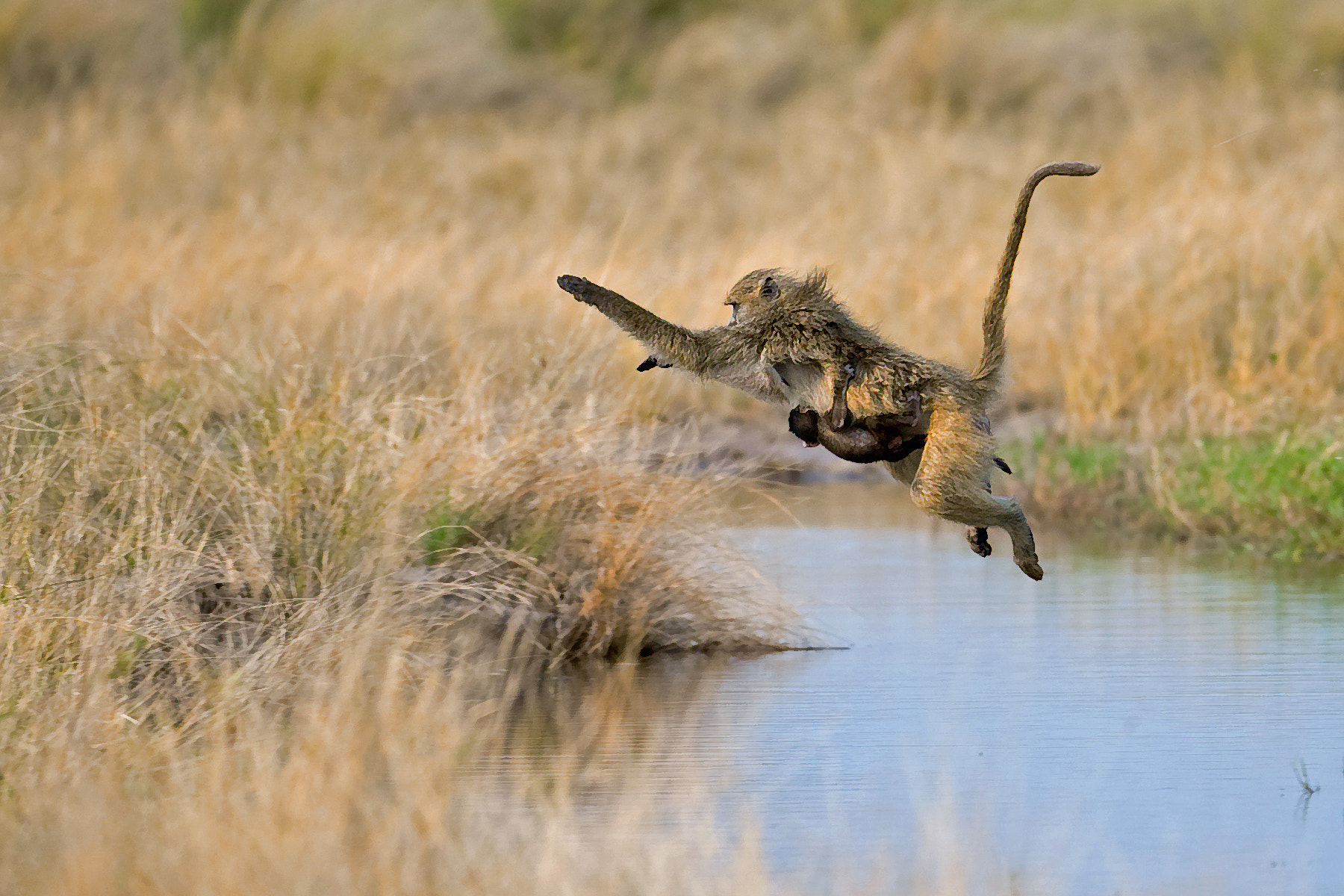 Photograph Hang on son! by Marc MOL on 500px