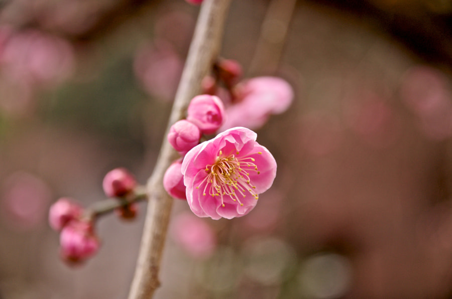 Lovely Pink by TEZ TAGAYA on 500px.com