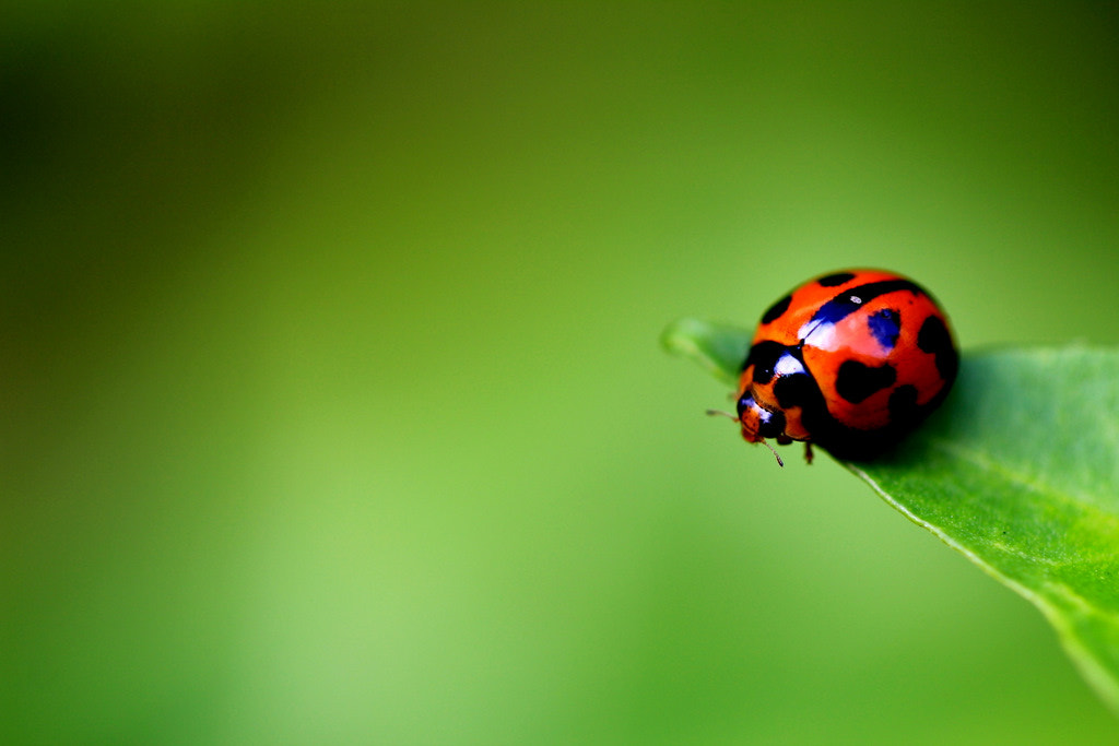 Photograph Macro by Paul Law on 500px