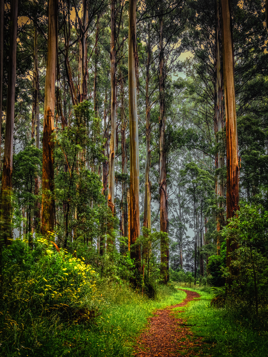 Photograph Enchanted Forest by Margaret Netherwood on 500px