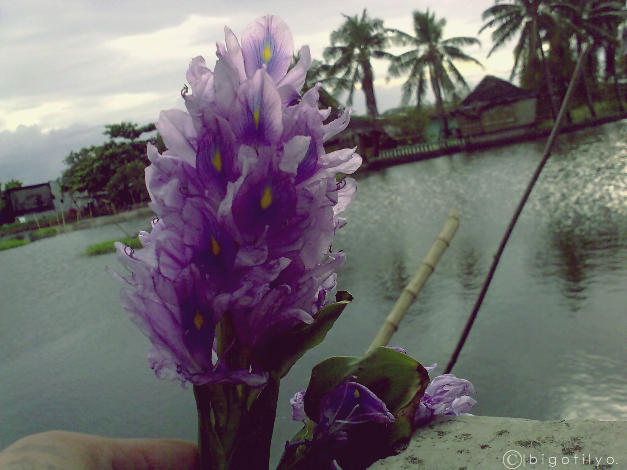 Photograph Bulaklak sa probinsya by Adrian FJ Real on 500px
