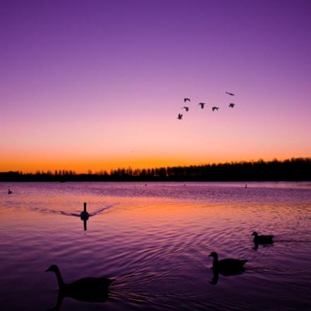 Willen lake morning