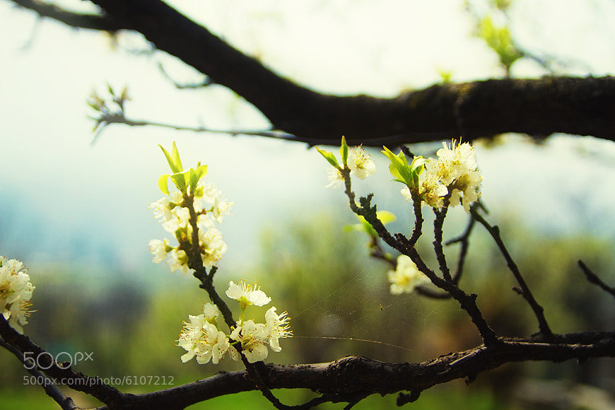 Photograph Spring story. by Anna Vesna on 500px