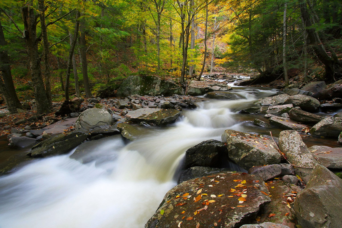 Photograph Three Seconds in Fall by Neil Shapiro on 500px
