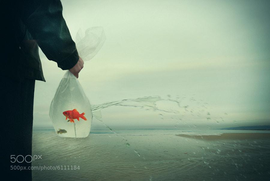 Photograph **** by Eddi Ger on 500px