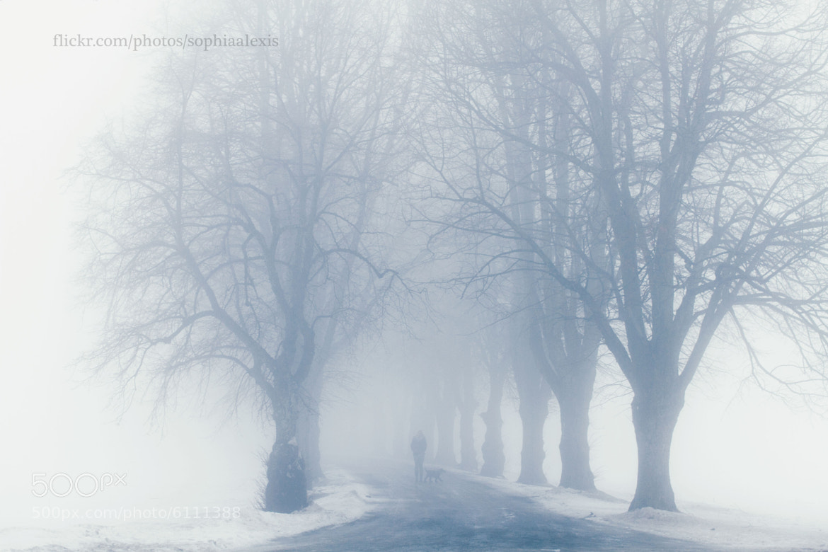 Photograph Enchanted Trees by Sophia Dyrby on 500px