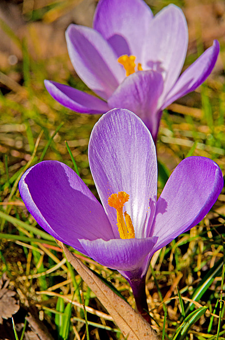 Photograph First flowers of spring by Ragnar Gjemmestad on 500px