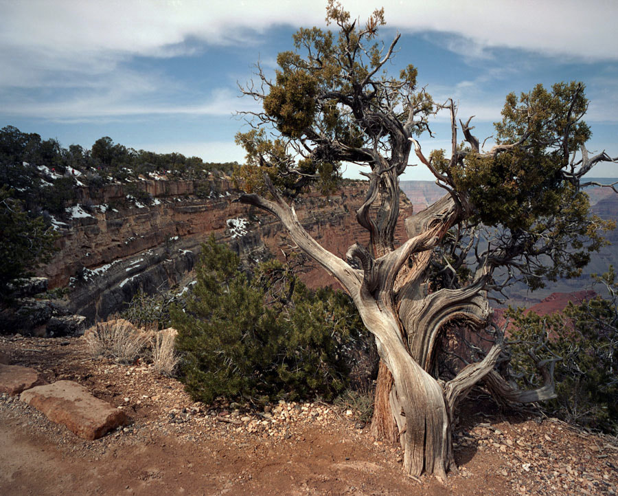 Photograph Along the Rim Trail by Steve Maniscalco on 500px