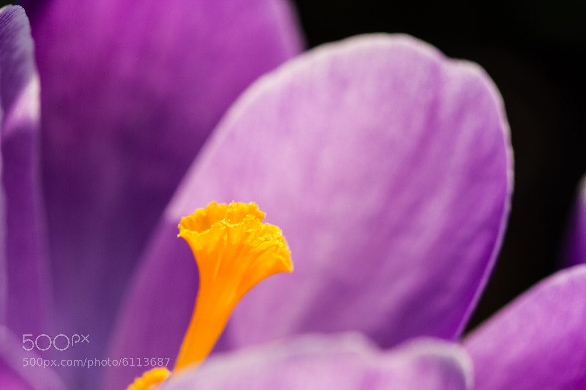 Photograph Flower by Markus _ on 500px