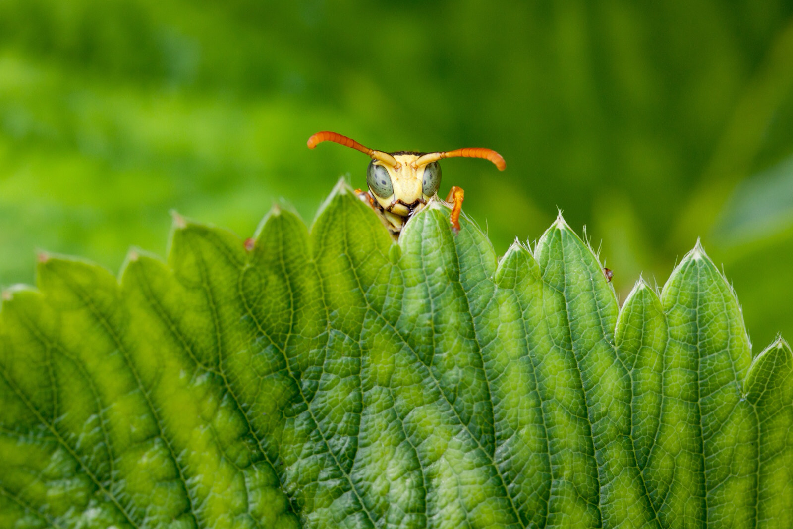 Photograph WASP by Marc Charbonnier on 500px