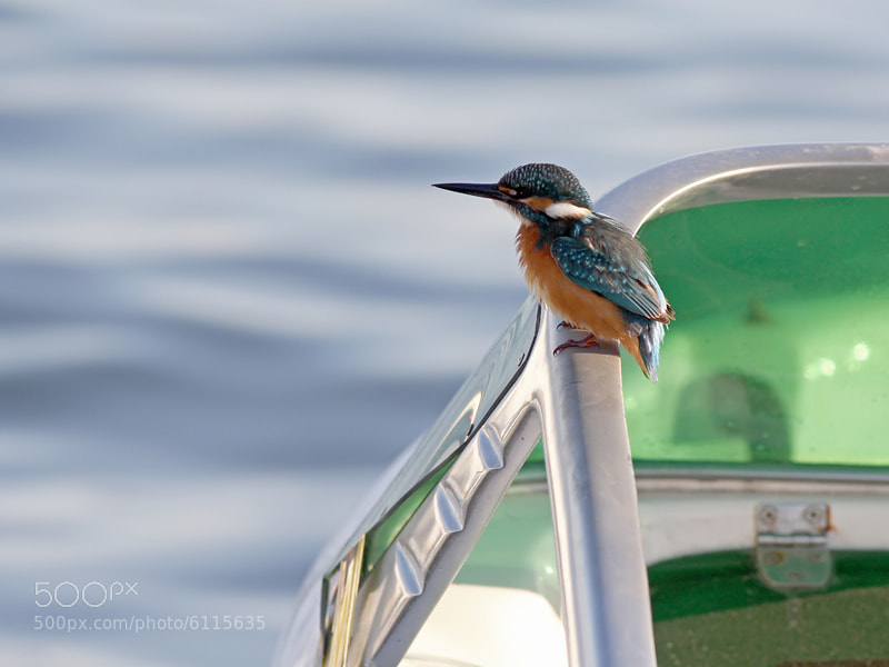 Photograph Kingfisher on Speedboat  by Aat Bender on 500px
