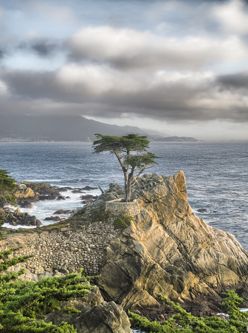 Photograph Lone Cypress by Thiemo R on 500px