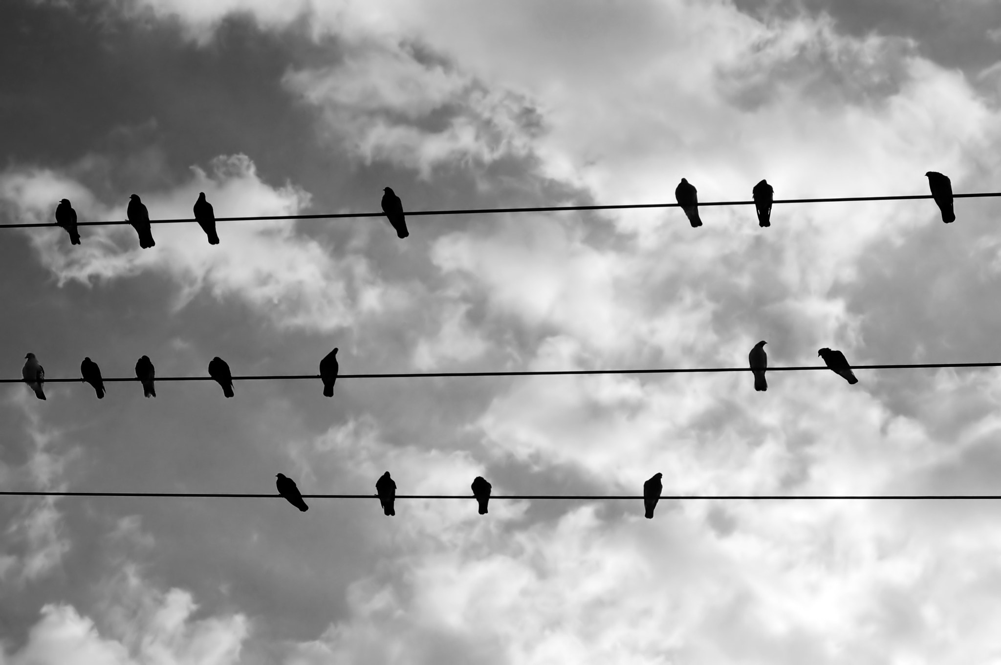 Photograph birds on a wire by Dimitris Kolyris on 500px