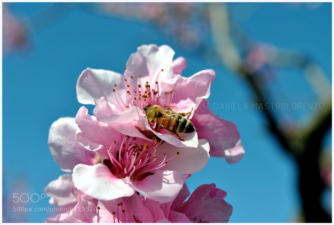 Photograph SPRING AND FLOWER by DANIELA MASTROLORENZO on 500px