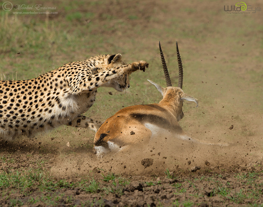 Photograph Smackdown by Morkel Erasmus on 500px
