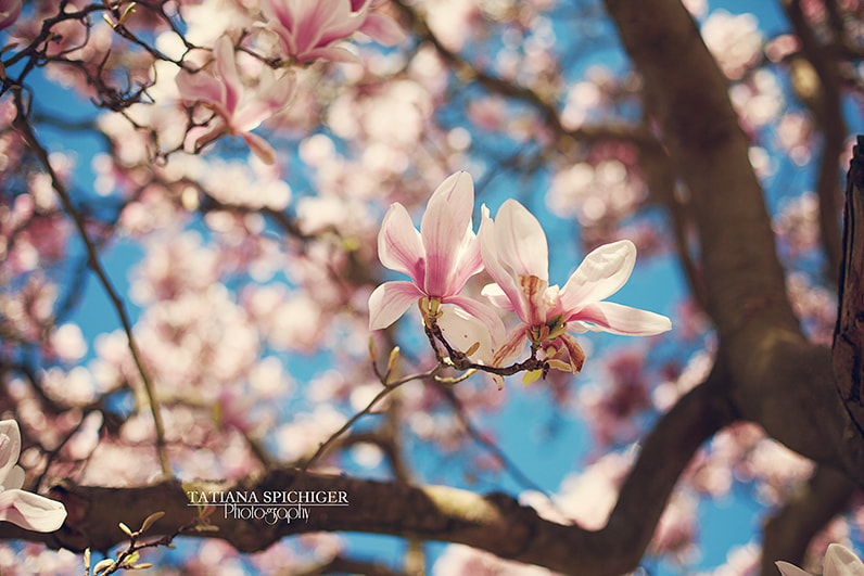 Photograph Blossom by Tatiana Spichiger on 500px