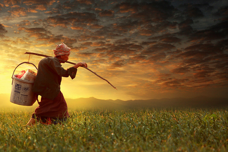Photograph Life in the field by sarawut khamfoo on 500px