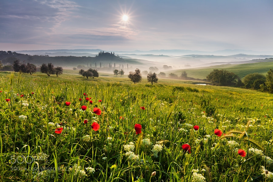 Photograph Tuscan meadow by Daniel Řeřicha on 500px