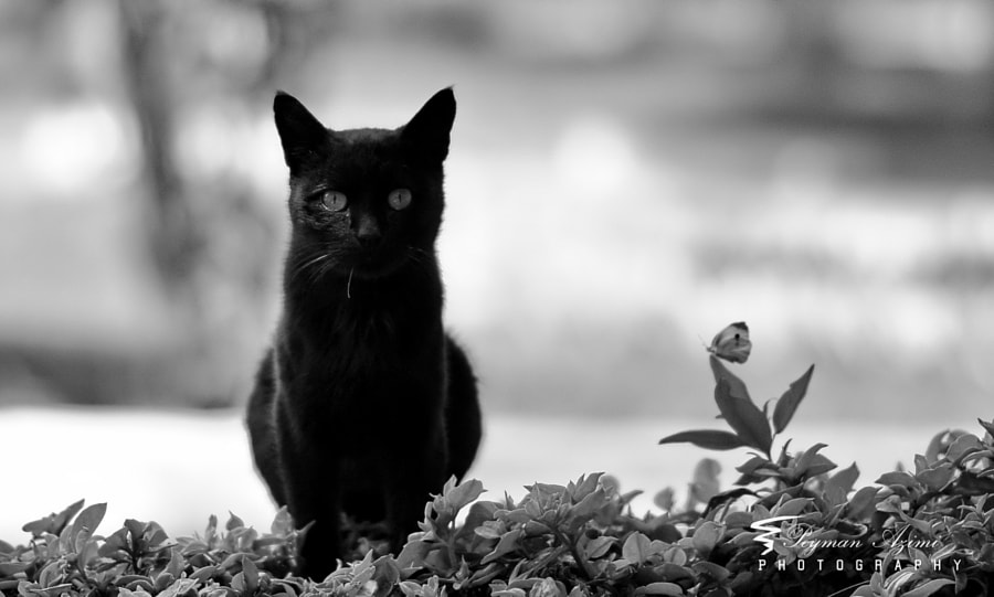 Black & White by Peyman Az on 500px.com