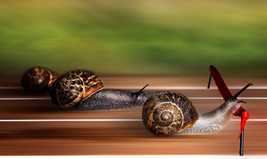 "Photograph The Snail series - ""Finish line"" by Osher Partovi on 500px"
