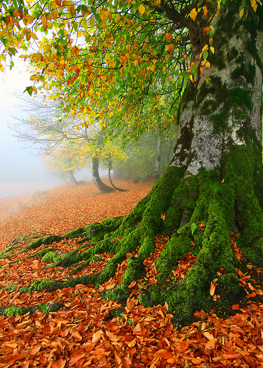 Photograph ROOTS & LEAVES by Seyed Mohammad  Shamsi on 500px