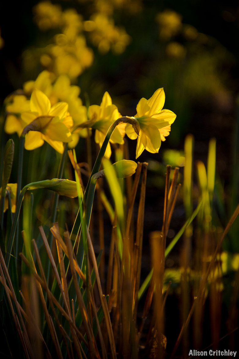 Photograph Evening Spring by Alison Critchley on 500px