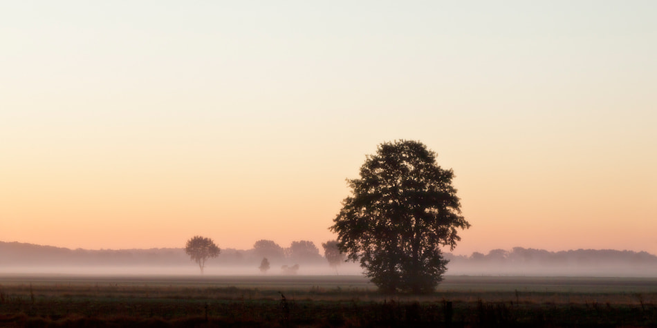 Photograph morning willow by Alexander Richter on 500px