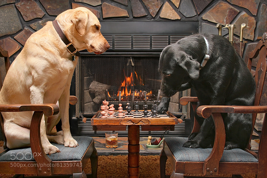 Photograph Dogs Playing Chess by Scott Cromwell on 500px