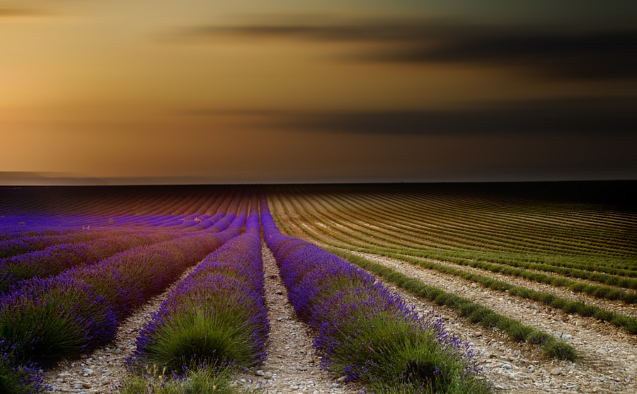 Endless lavender rows in Provence. by Ana Tramont on 500px.com