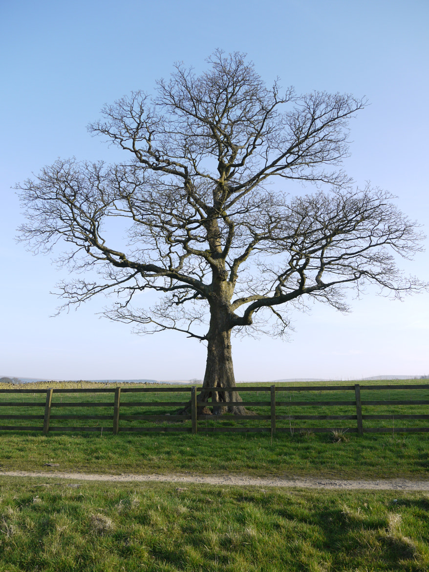 Photograph Rivington Lone Tree by Carole Critchley on 500px