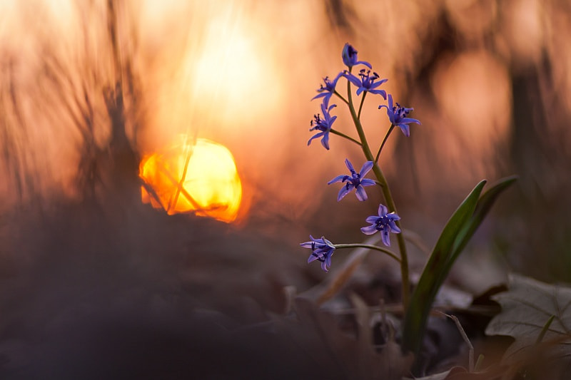 Photograph Dawn in the forest by Tibor Jantyik on 500px