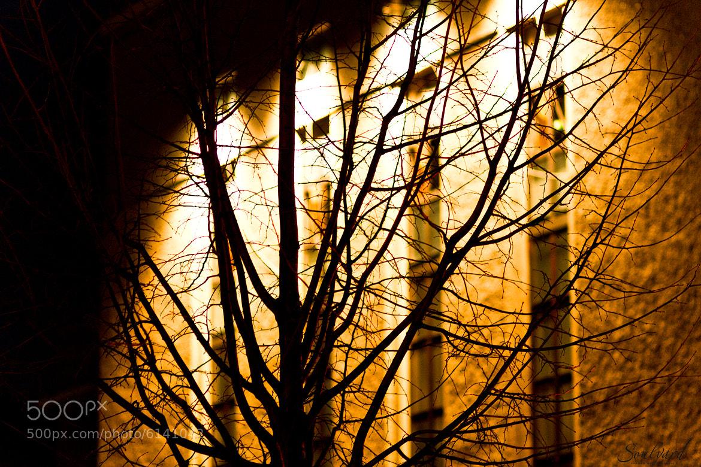 Photograph night atmosphere by Stefanie Seelhof on 500px
