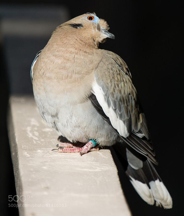 Oh, just bird stuffs.