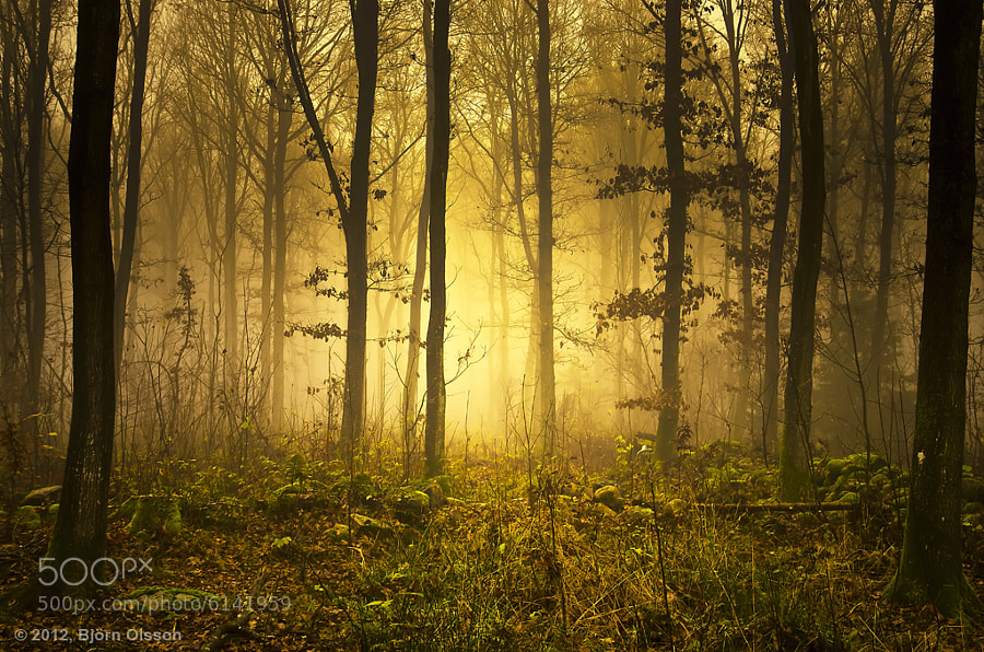 Mystic Light by Björn Olsson (bjornsphoto) on 500px.com