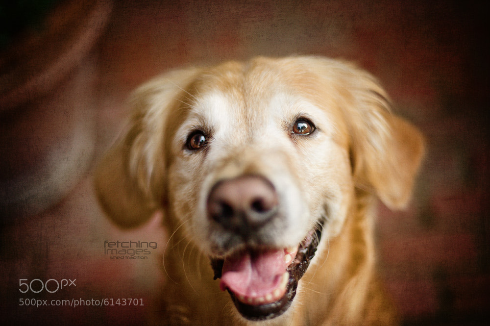 Photograph Portrait of Winston by Mel Hammonds on 500px