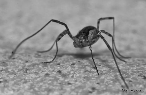 Photograph Spider by Vanesssa Art on 500px