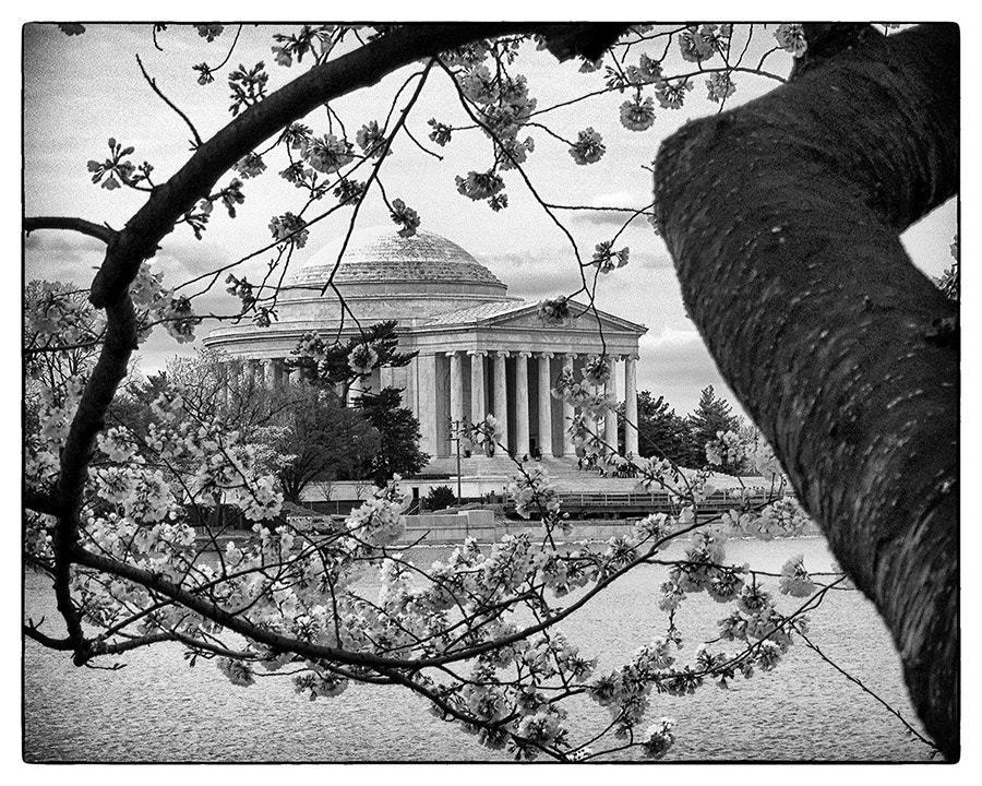 Photograph Cherry Blossom Jefferson Memorial by Michael Hansmann on 500px