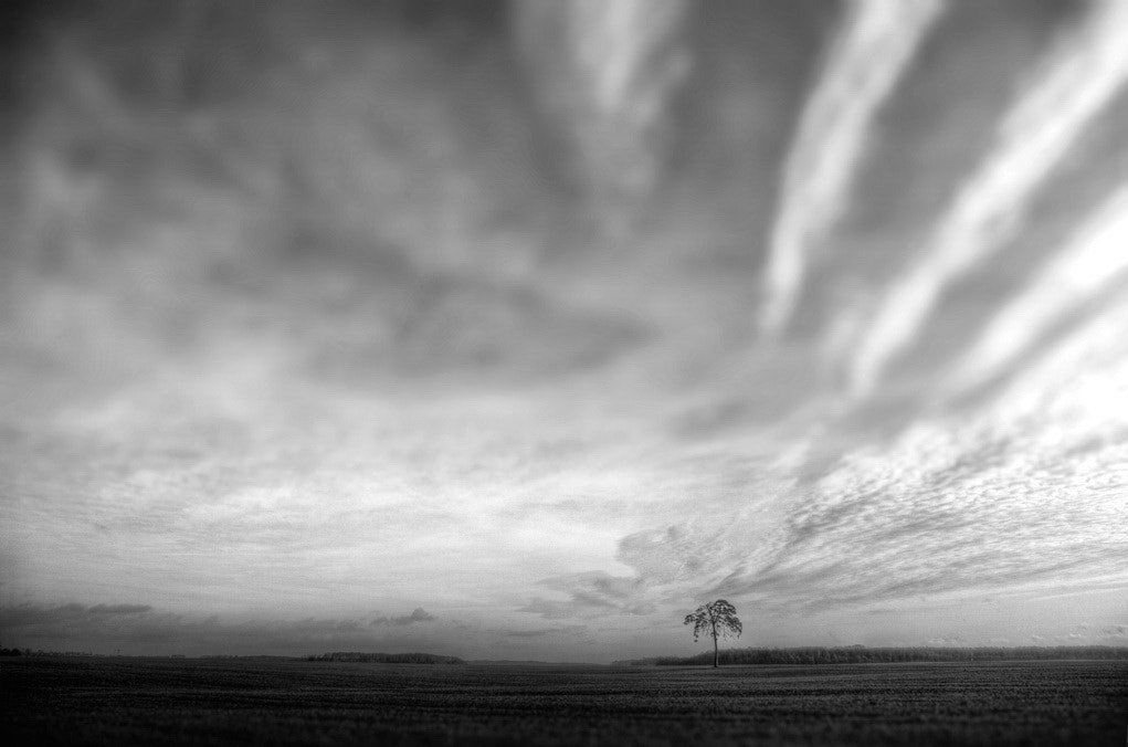 Photograph Pine, lonely by Darius Aperavicius on 500px