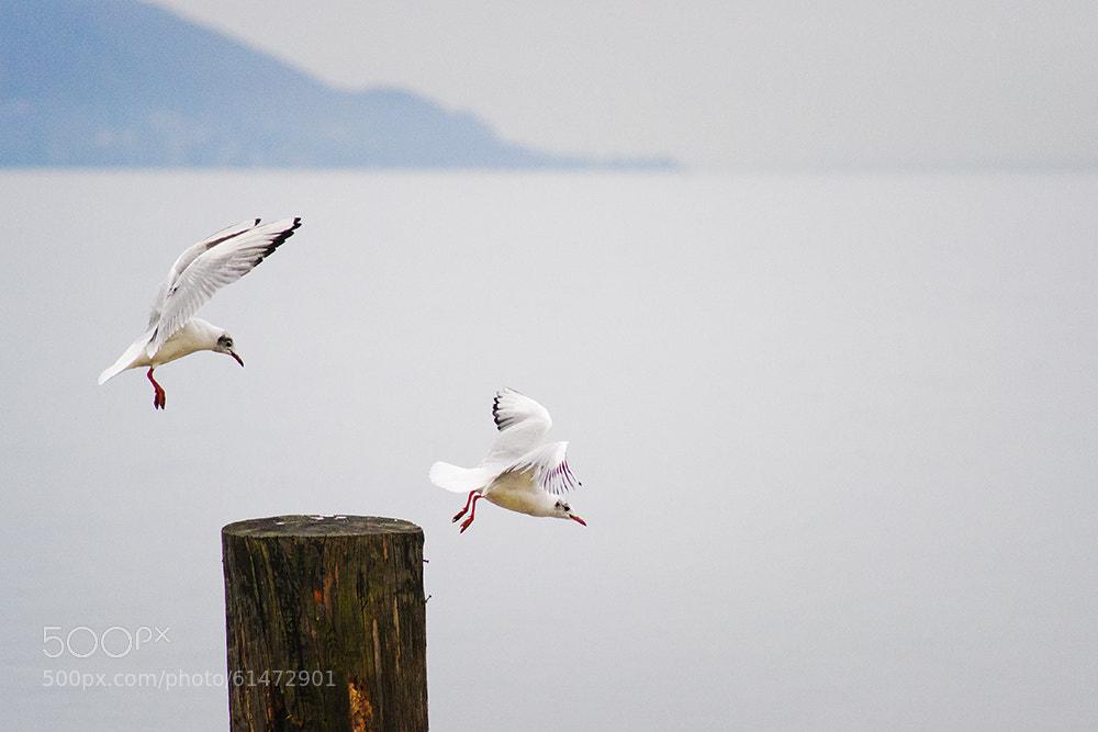 Photograph Go Away by Salmen Bejaoui on 500px