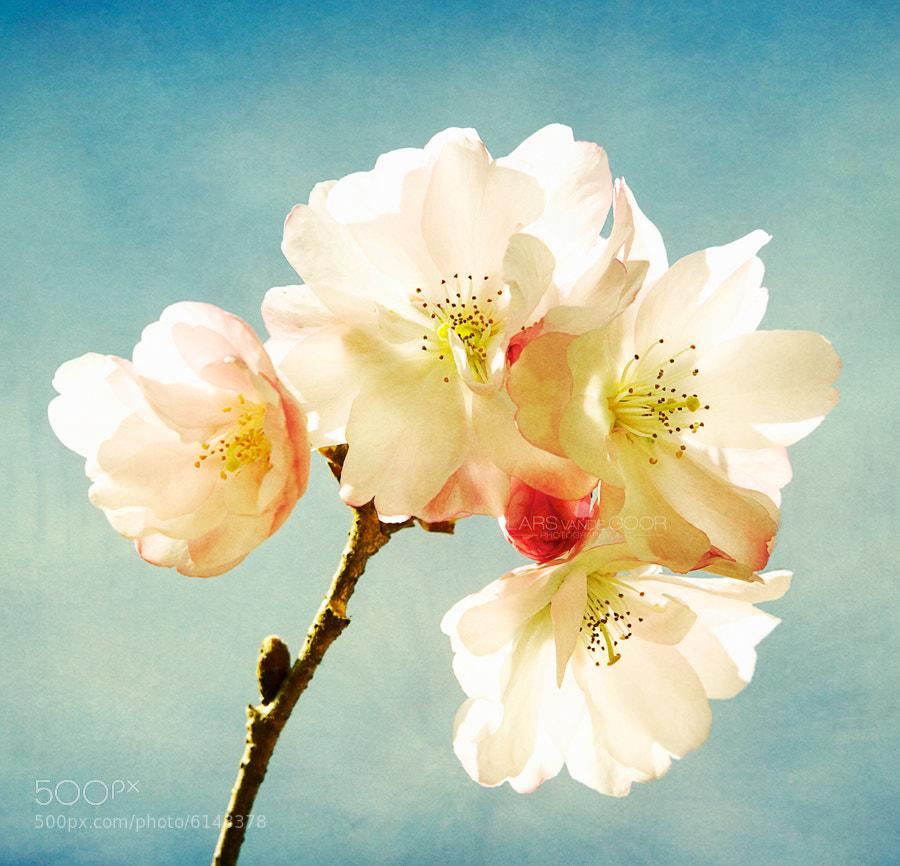 Photograph Happy Spring by Lars van de Goor on 500px