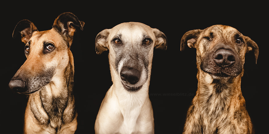 Photograph No nonsense gang by Elke Vogelsang on 500px